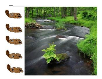 Beaver CVC Match