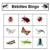Insectes Bingo