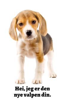 Bedårende Hunder: Beagle (Norwegian Edition)