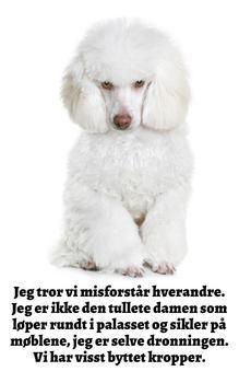 Bedårende Hunder: Pudler (Norwegian Edition)