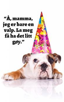 Bedårende Hundesamlinger Nr. 1 (Norwegian Edition)