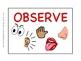 The 5 Senses: An Observation Mini-Lesson