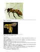 Bee Biology, Pollination, and Conservation Activity