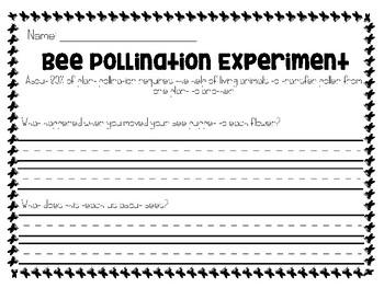 Bee Experiment
