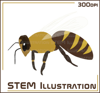 Bee Illustration Clip Art Clipart Image Graphic Bugs Insects