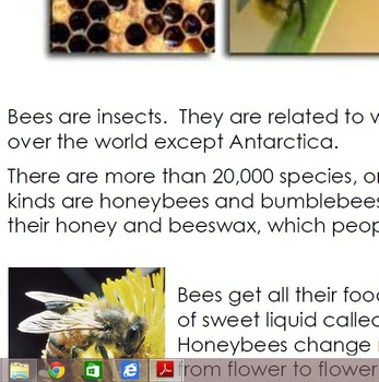 Bee Informational Text
