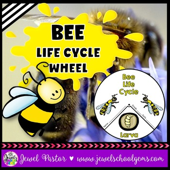 Animal Life Cycle Activities (Bee Life Cycle Craft)