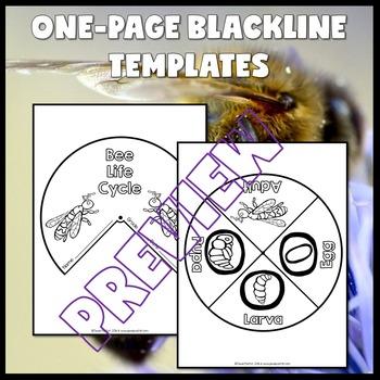 Animal Life Cycle Activities (Bee Life Cycle Craft)