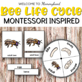 Bee Life Cycle 3 Part Cards and Spinner