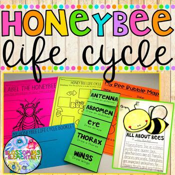 Honeybee Life Cycle