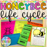 Honeybee Life Cycle