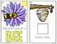 Bee Life Cycle Adapted Books { Level 1 and Level 2 }