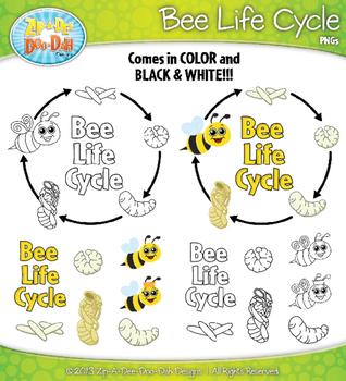 Bee Life Cycle Clipart {Zip-A-Dee-Doo-Dah Designs}