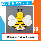 Bee Life Cycle Craft And Activity - Honey Bee Life Cycle