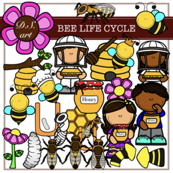 Bee Life Cycle Digital Clipart (color and black&white)