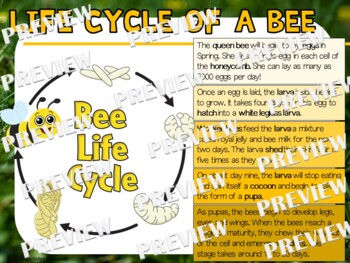 Bee Life Cycle Factball and Fact Sheet