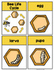 Bee Life Cycle Printable