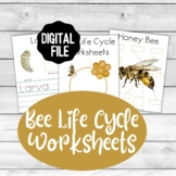 Bee Life Cycle Worksheets Beautiful Watercolor Bees