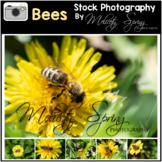 Photographs Bees Stock Photos Commercial and Educational
