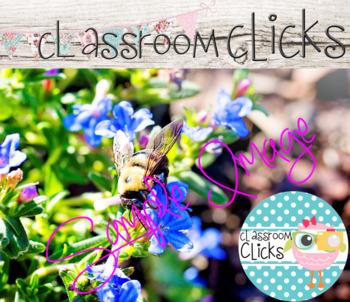 Bee Pollinating a Flower Image_296:Hi Res Images for Bloggers & Teacherpreneurs
