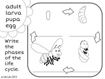 Bee life cycle FREEBIE by Lita Lita | Teachers Pay Teachers