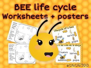 Bee life cycle FREEBIE