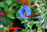 Bee on Blue Flower Stock Photo #244
