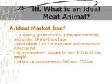 Beef Grading Powerpoint