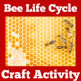 Honey Bee Life Cycle   Bee Life Cycle ( Lifecycle) Craft