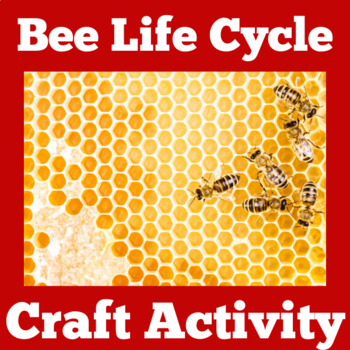 Honey Bee Life Cycle | Bee Life Cycle ( Lifecycle) Craft
