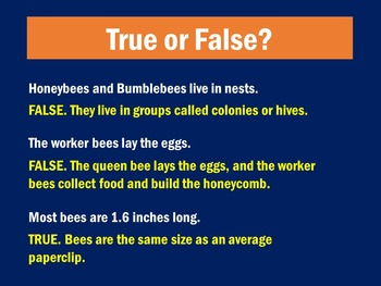 Bees PowerPoint