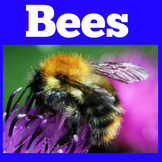 Bees | Honey Bees | All About Bees | PowerPoint | Activity