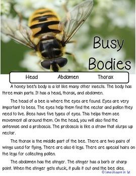Bee Unit