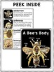 Bee Activities Nonfiction Unit