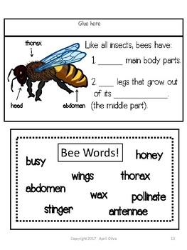 Bees Interactive Notebook