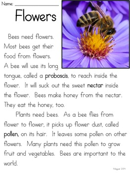 Bees: One  Super Important Insect - A Common Core Unit
