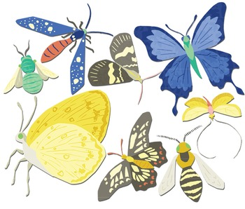 Bees Butterflies Moths, Butterfly Clipart, Insect Clipart, Bug Clipart
