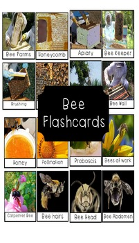 Bees Flashcards