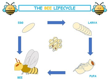Bees Printables! Creative writing and Science about Bees.