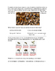 Bees (adapted story)