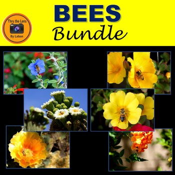 Bees and Flowers Bundle
