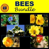 Bees and Flowers Photo Bundle
