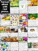 Bees and Pollination Unit & Nonfiction Reader Bundle! [Sci