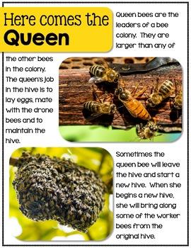 Bees and Pollinators- A Nonfiction Unit