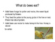 Bees ... and why we need to care about them!
