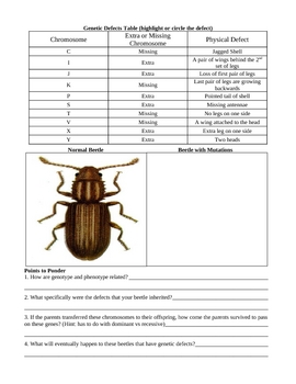 Beetle Chromosome Study Worksheet
