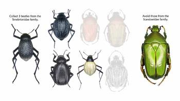 Beetle Sort!  A pattern puzzle for kindergarten through grade 2.