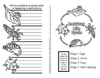 Beetles, Ladybugs & Bess Beetles! {A booklet celebrating Coleoptera}