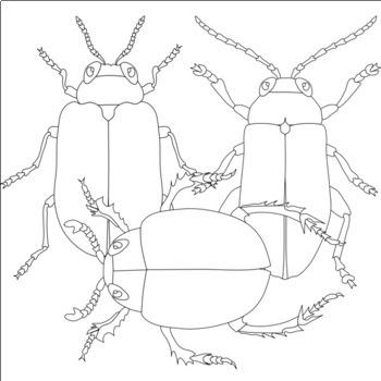 Beetles Bugs Clip Art