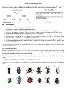 Beetles Dichotomous (Taxonomic) Key Project